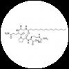 Palmitoyl Tetrapeptide-3